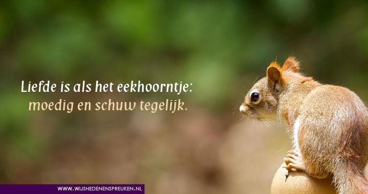 Liefde is als het eekhoorntje
