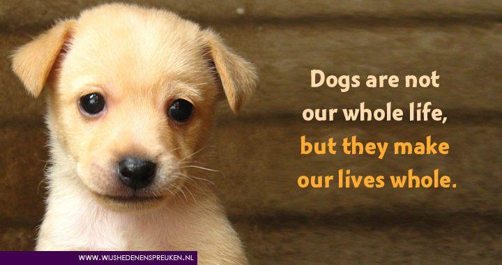 spreuken over dieren Leuke Spreuken Over Honden   ARCHIDEV spreuken over dieren